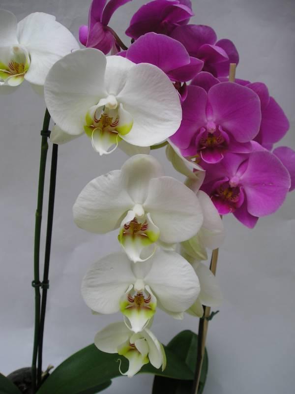 скачать книгу уход за орхидеями в домашних условиях