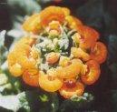 Кальцеолярия (Calceolaria) / Комнатные растения и цветы / Однолетние