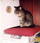 Болезни кошек (Diseases) / Породы кошек / Породы кошек: Советы: Уход, советы, бесплатные объявления, форум, болезни
