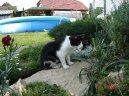 Домашние кошки (Domestic cat)