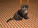 Травмы (Injuries) / Породы кошек / Породы кошек: Советы ветеринара: Уход, советы, бесплатные объявления, форум, болезни