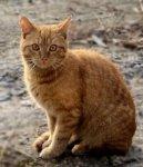 Уход за старой кошкой (Caring for the old cat)