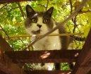 Выставки (Exhibitions) / Породы кошек / Уход, советы, бесплатные объявления, форум, болезни