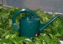 Полив цветов и влажность воздуха (Watering flowers and humidity) / Комнатные растения и цветы / Советы по выращиванию
