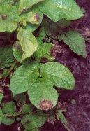 Помощь против болезней комнатных растений (Help against diseases houseplants) / Комнатные растения и цветы / Советы по выращиванию