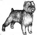 Аффенпинчер (обезьяний пинчер) (Affenpinscher) / Породы собак / Породы собак: Пинчеры и шнауцеры, молоссы: Уход, советы, бесплатные объявления, форум, болезни