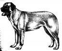 Анатолийская пастушья собака (анатолийский карабаш) (Anatolian Shepherd Dog, Anatolian Karabash Dog) / Породы собак / Породы собак: Служебные: Уход, советы, бесплатные объявления, форум, болезни
