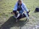 Бассет голубой гасконский (Basset bleu de Gascogne, Blue Gascony Basset) / Породы собак / Породы собак: Охотничие: Уход, советы, бесплатные объявления, форум, болезни