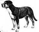 Большой швейцарский зенненхунд (Grosser Schweizer Sennenhund)