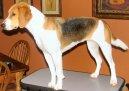 Харьер (Harrier Dog) / Породы собак / Породы собак: Охотничие: Уход, советы, бесплатные объявления, форум, болезни