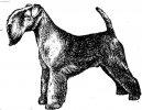 Лейкленд-терьер (Lakeland Terrier)