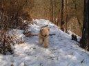 Лейкленд-терьер (Lakeland Terrier) / Породы собак / Уход, советы, бесплатные объявления, форум, болезни