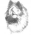 Ойразиер (евразиер) (Eurasier) / Породы собак / Уход, советы, бесплатные объявления, форум, болезни