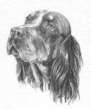 Пикардийский спаниель (Picardy Spaniel) / Породы собак / Уход, советы, бесплатные объявления, форум, болезни