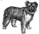 Пиренейская овчарка длинношерстная (жесткошерстная) (Pyrenean Sheepdog Long-haired)