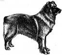 Пиренейская овчарка (гладкошерстная с короткошерстной мордой) (Pyrenean Sheepdog)
