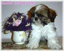Щенок в доме (Living with your puppy) / Породы собак / Уход, советы, бесплатные объявления, форум, болезни