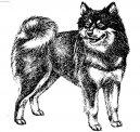 Шведский лаппхунд (Swedish Lapphund, Ruotsinlapinkoira, Lapphund) / Породы собак / Уход, советы, бесплатные объявления, форум, болезни