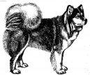 Суоменлапинкойра (Suomenlapinkoira) / Породы собак / Уход, советы, бесплатные объявления, форум, болезни