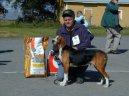 Трехцветная финская гончая (Suomenajokoira, Finnish Hound) / Породы собак / Уход, советы, бесплатные объявления, форум, болезни