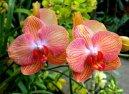 Выращивание орхидей (Orchidaceae)