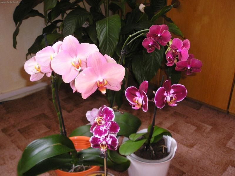 Болезни орхидей в домашних условиях видео - Club-j.ru