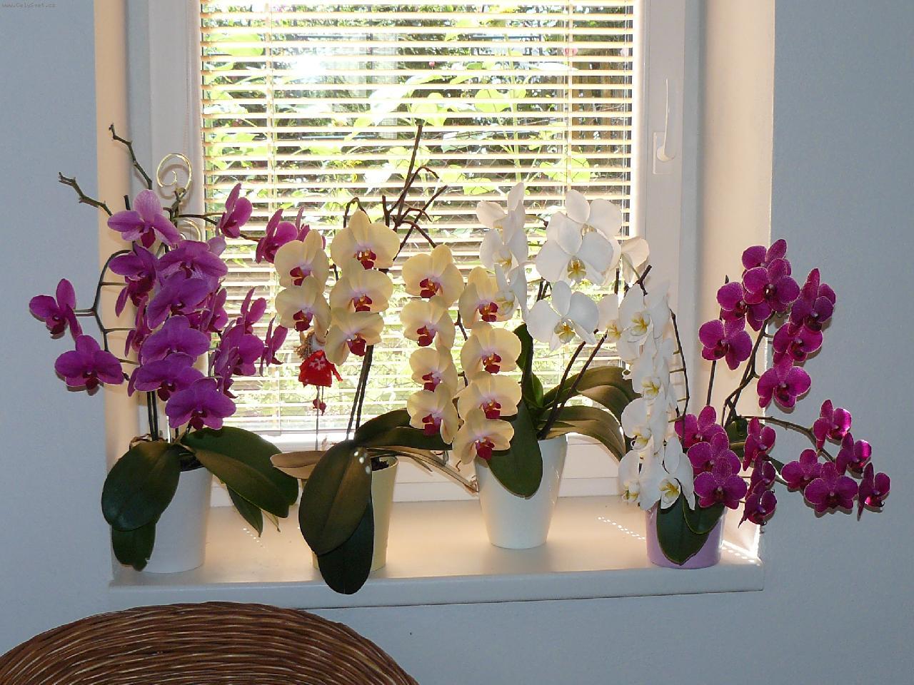 Что сделать, чтобы зацвела орхидея: стимуляция в домашних 22