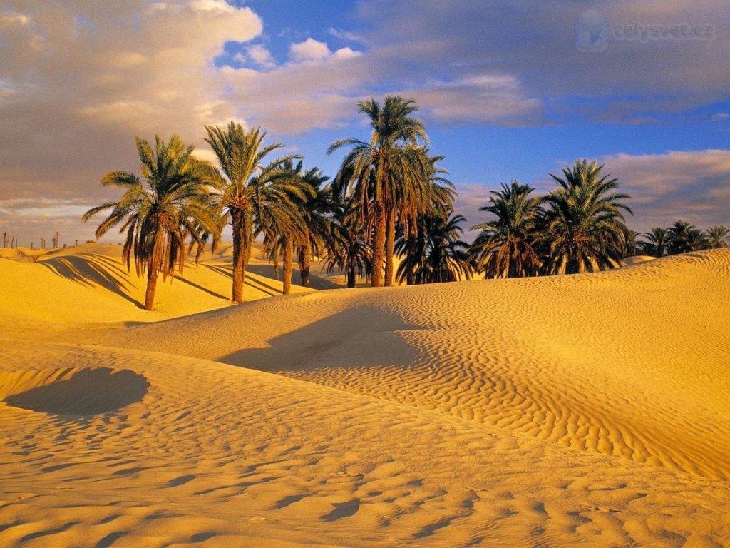 Пустыня бесконечности. Staty-853