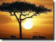"""Предпросмотр схемы вышивки  """"Африка """"."""
