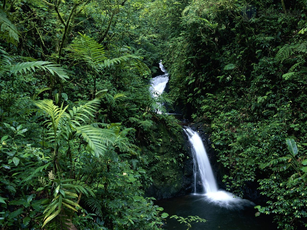 Costa rica cloud forest canopy tour