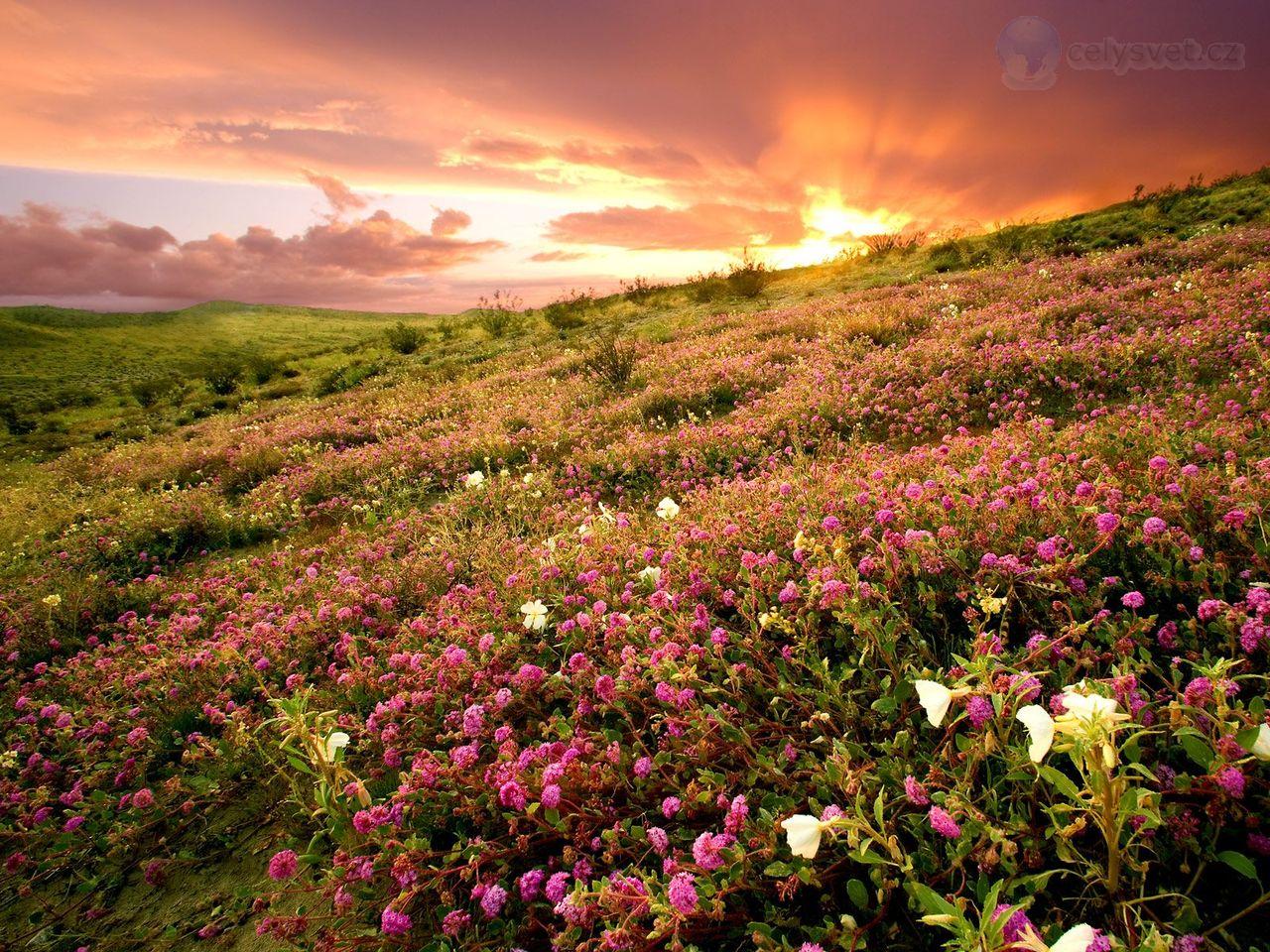 Фото красивой полей цветов