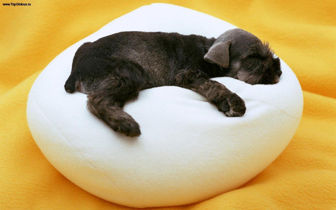 Стильная лежанка для собаки