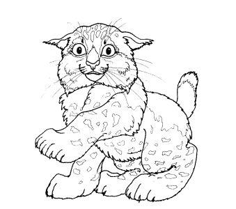 Кошки раскраски онлайн