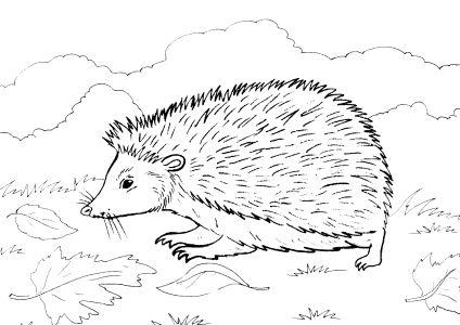 Раскраска для детей дикие животные распечатать