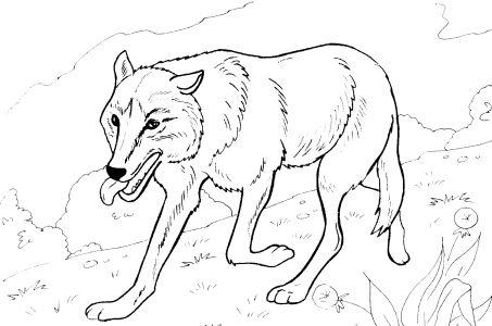 Раскраски животные лиса волк 9