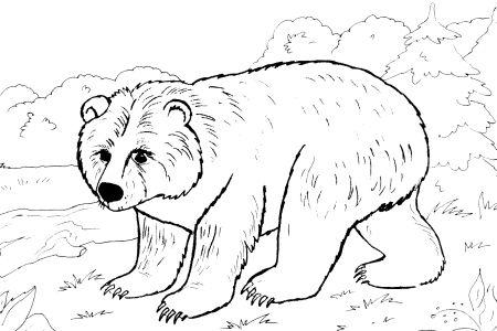 Раскраски медведи соседи распечатать 82