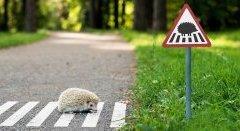 Тест по дорожным знакам
